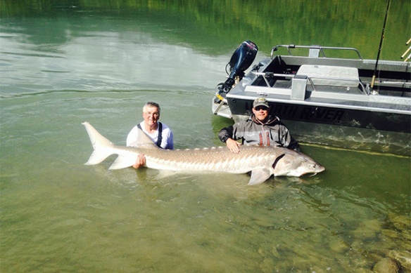 Ray and one of his big sturgeon