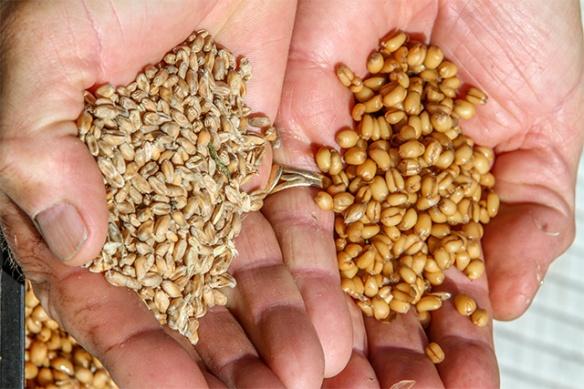 Wheat-Prep-blog
