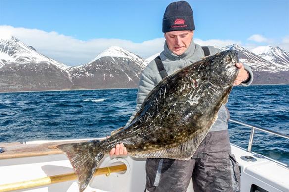 blog-skjervoy-norway-halibut