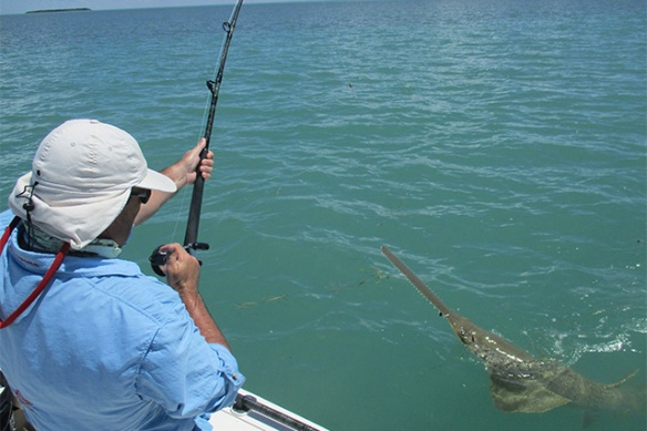 BLOGSAWFISH014