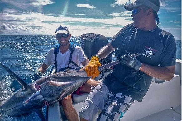 fb-billfish